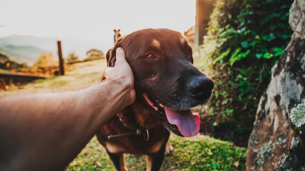 How Therapy Pets Can Help Stroke Survivors with Aphasia